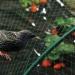 Sieť na ochranu rastlín a plodov proti vtákom 4x20m